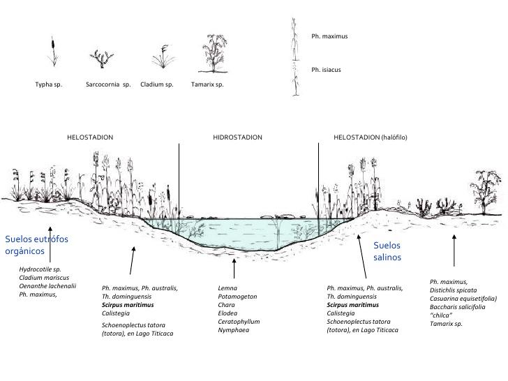 ecosistemas-vegetales-acuaticos-y-palustres-7-728