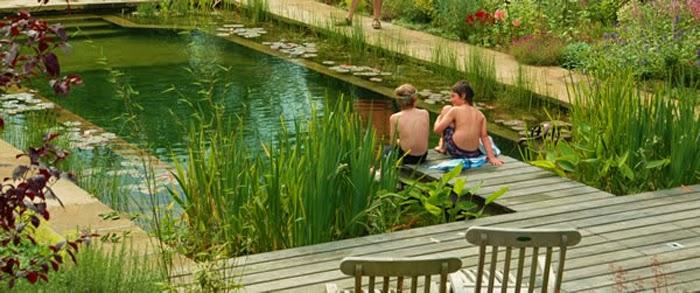 estanque-de-natacion-piscina-natural-acuatica-nadar-ecologico-nenes