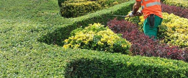 mantenimiendo jardines 1