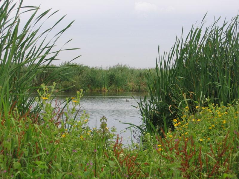vegetacion-palustre-en-la-laguna-dulce